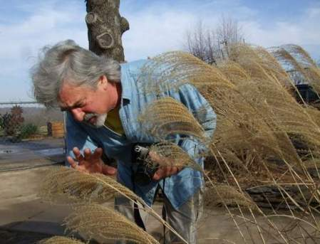 Bob White blind photography