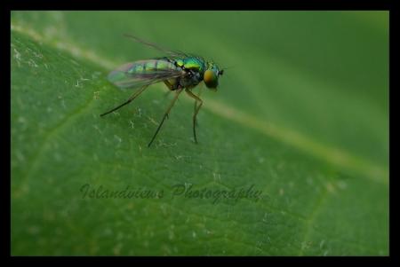 Fly macro leaf