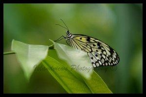Butterfly macro leaf