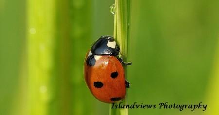 Ladybug Ladybird macro grass