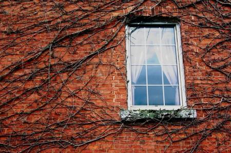 imgp9613-window-and-vines-2