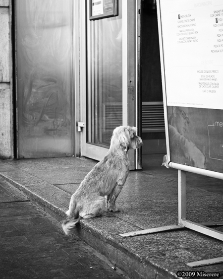 Miserere - Madrid Waiting Dog