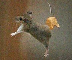 Strobist mouse
